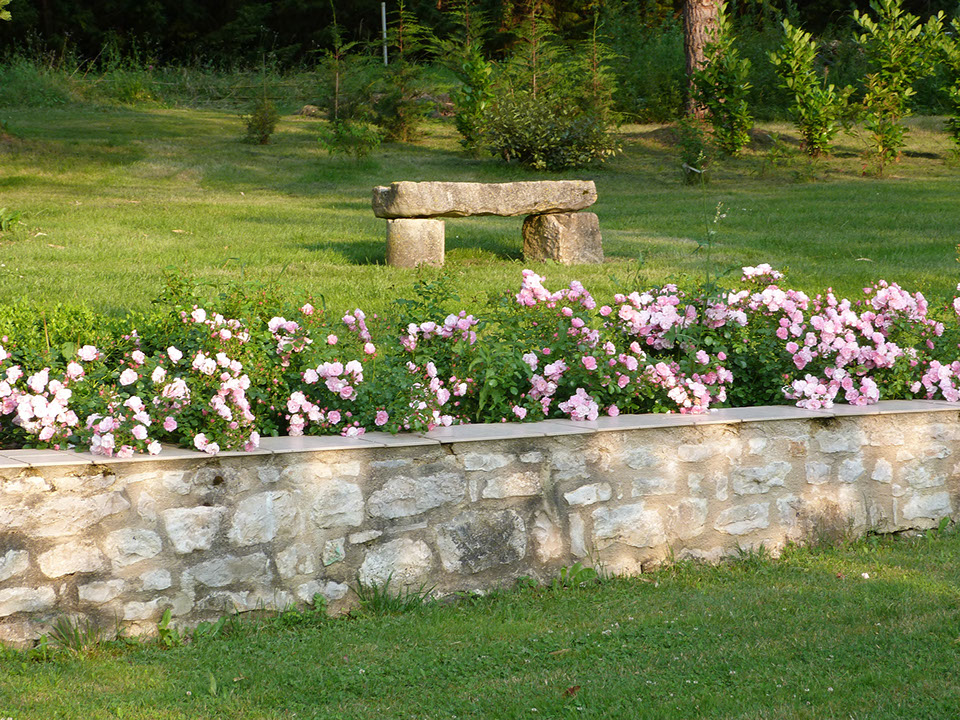 Garden roses and stone bench